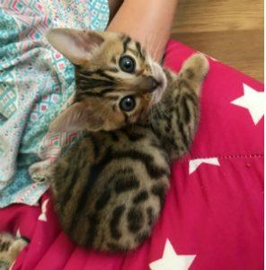 Kattungen Wake Me Up
